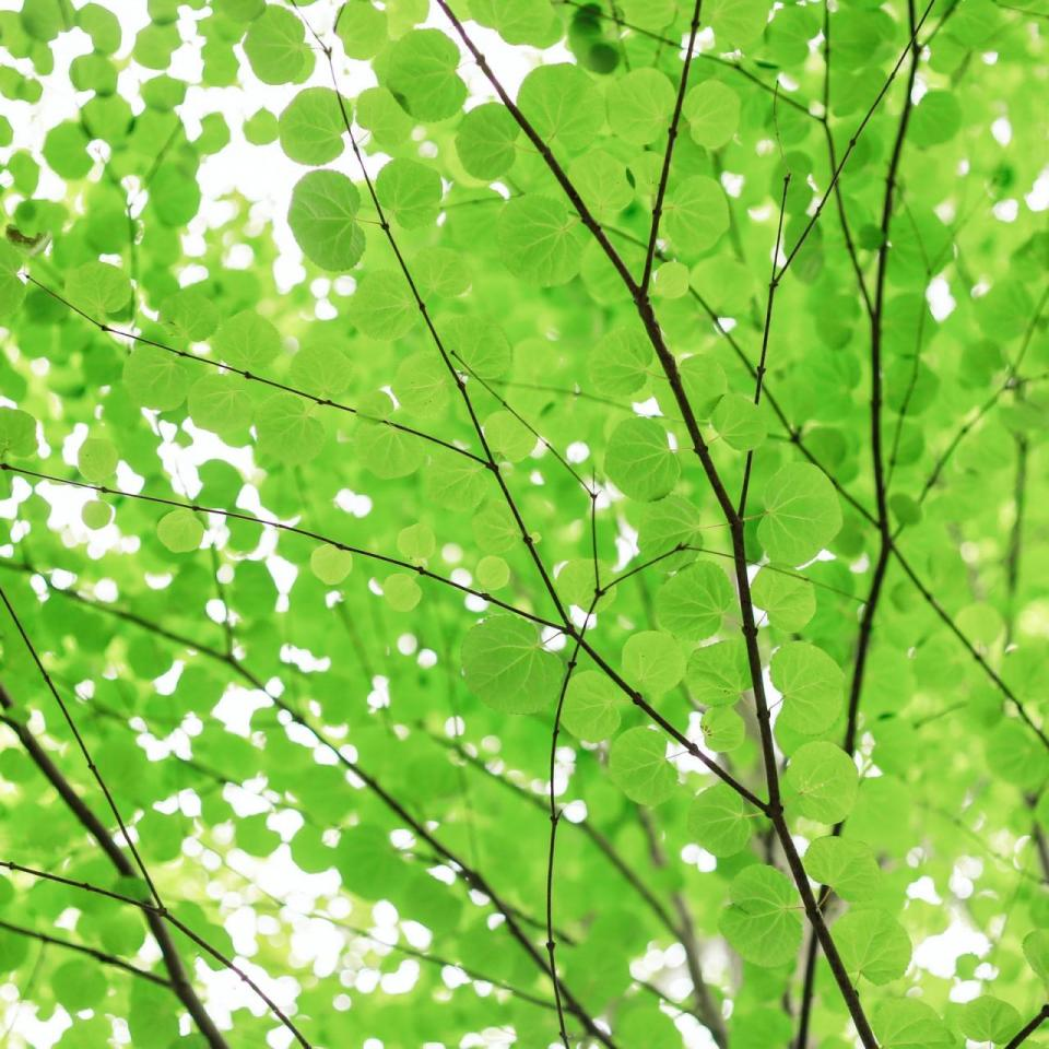 Green leaves on a tree against a bright sky